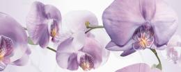Colours Blanco D Orquidea 20х50 (компл. из 2 шт.)