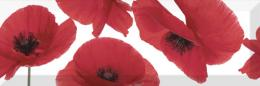 Decor Poppy 15*45