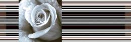 DECOR ROSE 01 15*45